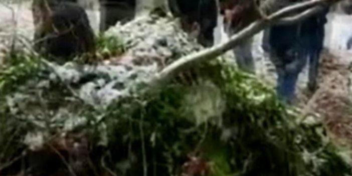 İzinsiz kazı yapan 11 kişiye ceza yağdı