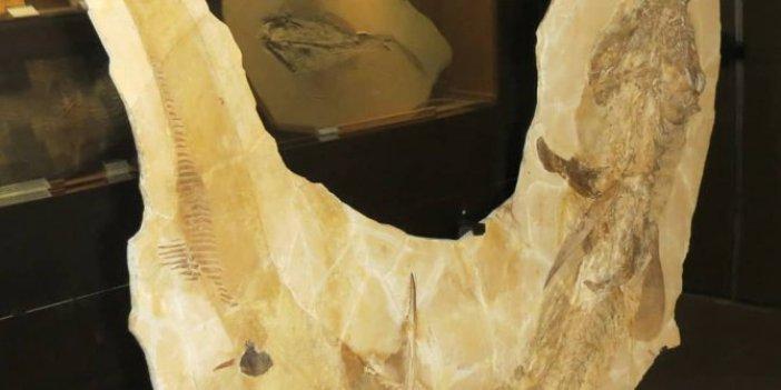 Tam 150 milyon yıllık 3 metre boyutunda. Keşif ekibi hayretler içerisinde kaldı