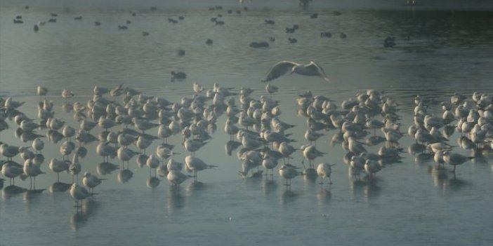 Gölet buz tuttu müdavimleri buzlu suda avlanmaya çalıştı