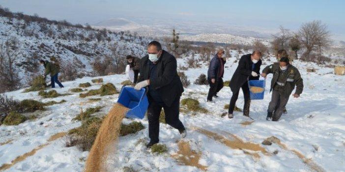 Aksaray'da yoğun kar yağışı sebebiyle yaban hayvanlarına yem dağıtıldı