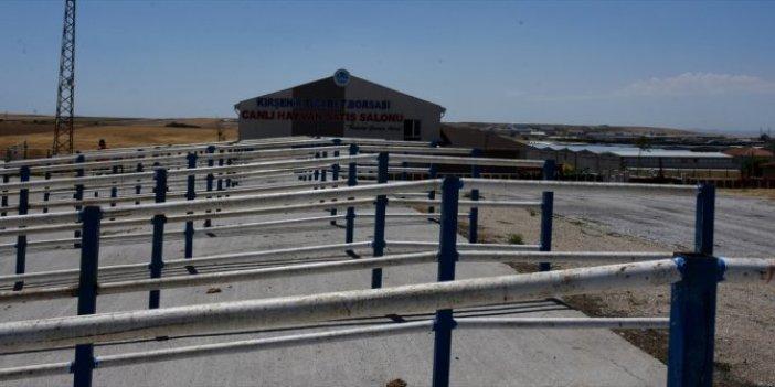 Kırşehir'de hayvan pazarı kapatıldı