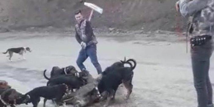 Denizli'de zavallı yavruyu 10 köpeğe parçalattılar. Çocuklar sizi bu hale kim getirdi