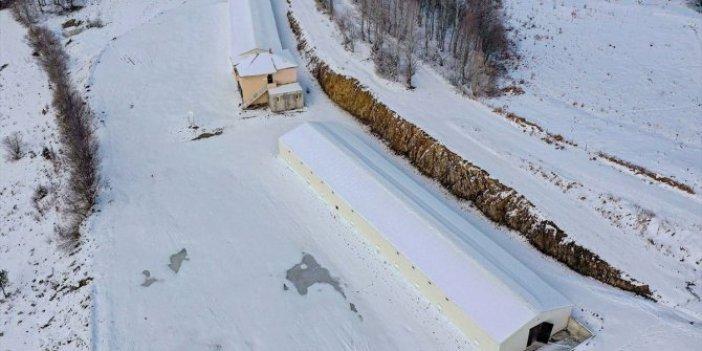 Ordu'da 40 bin civciv üretimi için tesis kuruluyor