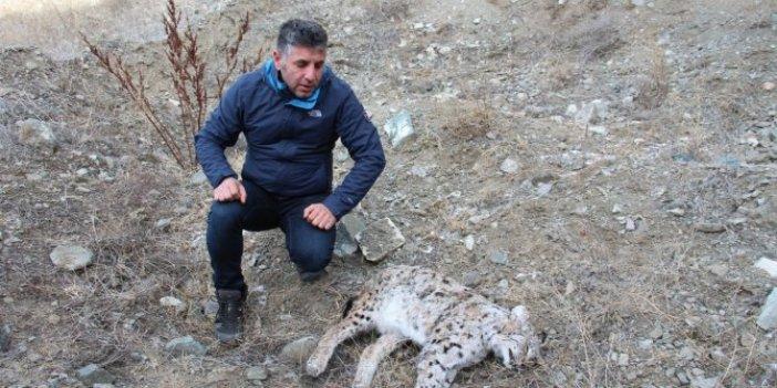 Nesli tükenmek üzereydi Erzurum'da öldürüldü