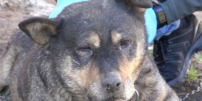 Trabzon'da bahçeye giren köpek sopa ile öldürüldü iddiası