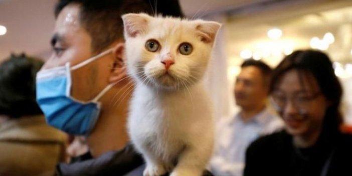 Güney Kore'de kedinin korona testi pozitif çıktı