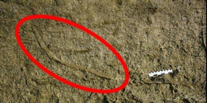 Araştırmacılar kayalık bir bölgede buldu. Uzunluğu tam 2 metre ve okyanus tabanında 20 milyon yıl gezdiler