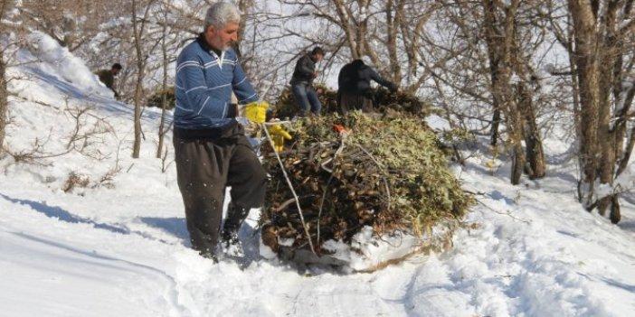 Dondurucu soğuklar bile onları durduramıyor. Kilolarca ağırlıkla kilometrelerce yol gidiyorlar