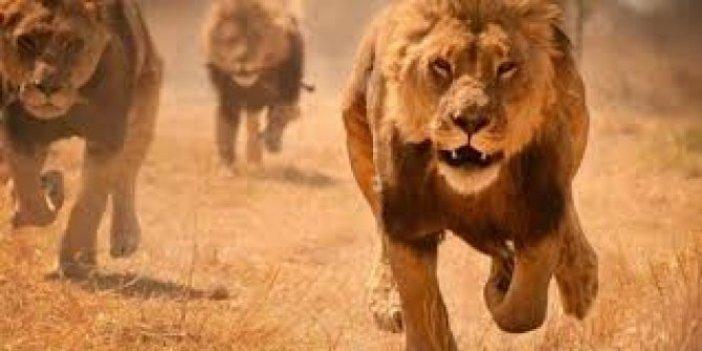 15 yaşındaki çoban aslan saldırısında öldü