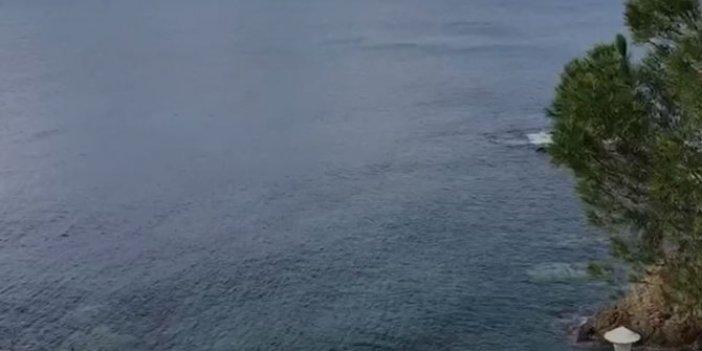 Seferihisar'da neler oluyor. Kimse denize bakmak istemiyor