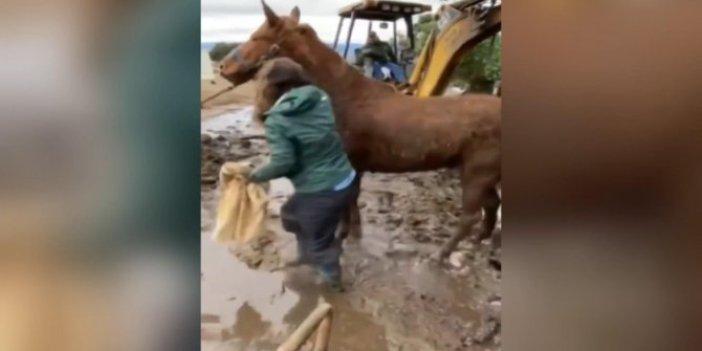 Yoğun yağmurdan oluşan balçıkta mahsur kalan 2 atı kurtarmak neredeyse 24 saat sürdü