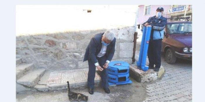 Kütahya'da örnek kedi evi projesi