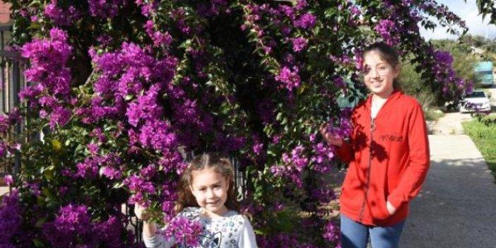 Antalya'da yalancı bahar. Nedeni belli oldu